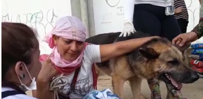 Perro salvó a una mujer de la avalancha en Mocoa
