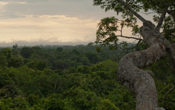 La Amazonia podría convertirse en una sabana en 50 años, según estudio