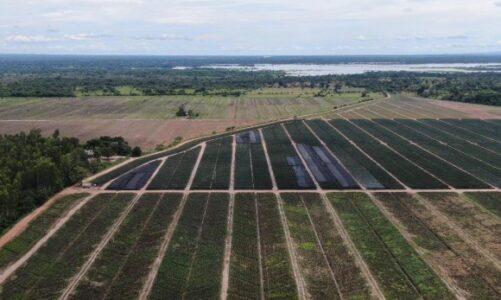 Colombia exportará por primera vez piña a Canadá